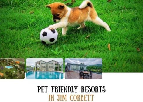 Pet Friendly Resorts In Jim Corbett