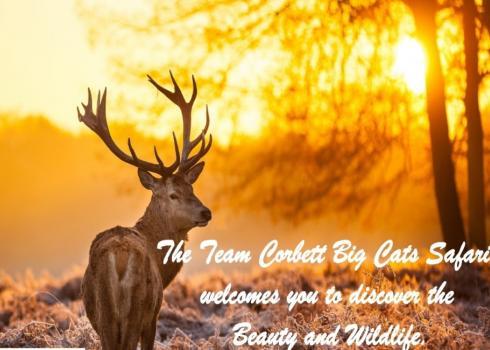 Garjiya Safari Zone Opening Soon At Jim Corbett