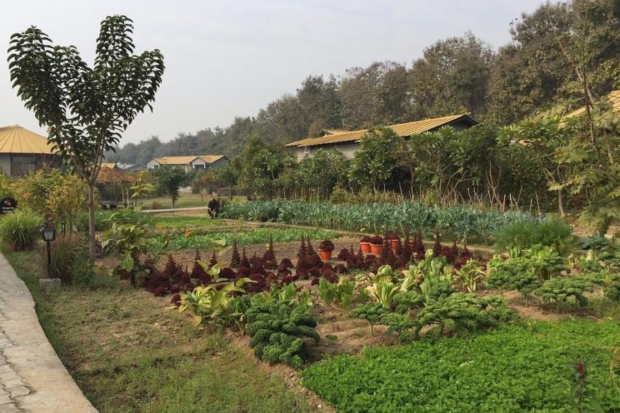 Aahana Organic Garden