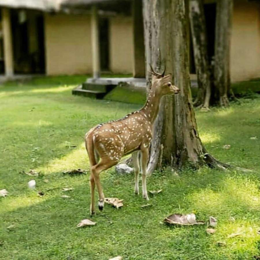 Deers In Bijrani Camp